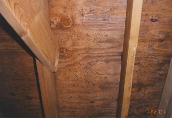 Black mold, a health hazard, already developing on the north side